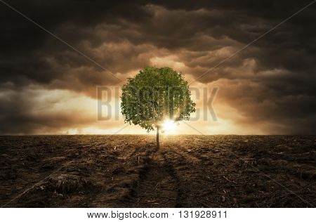 Single tree left on the chopped out forest over dramatic sky with copy space