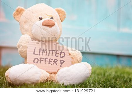 Teddy Bear Holding Cardboard With Information Limited Offer