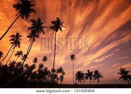 Sri Lanka Hikkaduwa Coconut Plantation