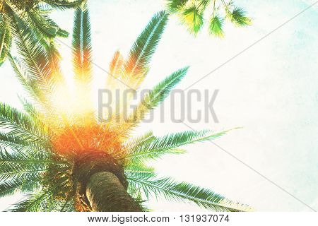 palm trees with copy space on sky, retro toned and textured