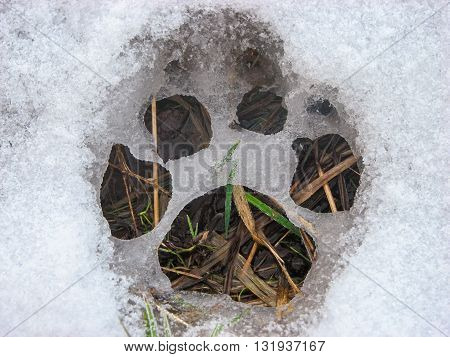 The dog's paw prints on the snow