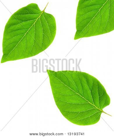Green leaf abstract frame