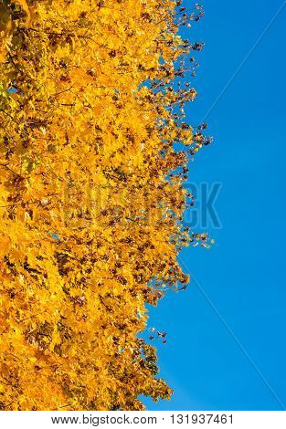autumn landscape on a background of blue sky