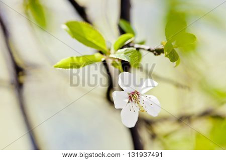 Macro photography of beautiful flowers. Spring detail