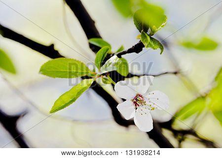 Closeup Of Beautiful Flowers
