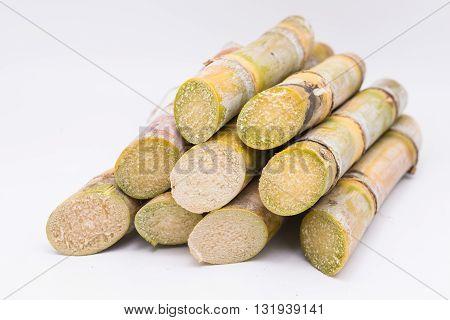 Close up sugarcane on white background. sugarcane