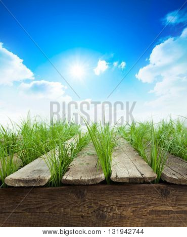 Summer background with Wood table, green grass and sunlight