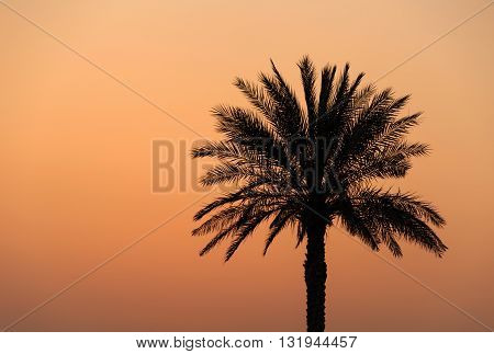 silhouette of palm tree over orange sky at sunset