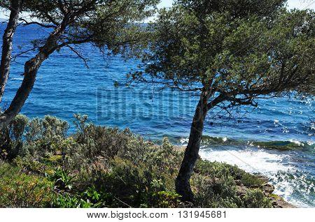Rayol Canadel sur Mer France - april 18 2016 : the estate Rayol garden in spring
