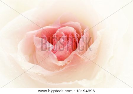 Close-up shot of a rose bud with water drops on petals