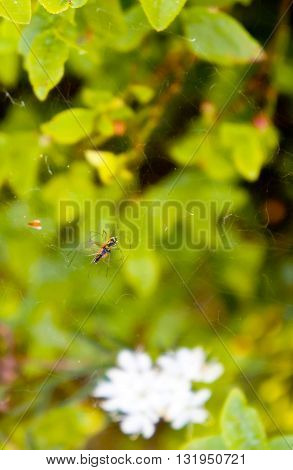 one, hangs, black spider, a grass, the nature, a flower, a web, a white, the wood, the spider, a green background