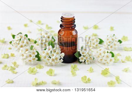 Glass bottle with essential oil, white flower blossom scattered. Herbal wellness.