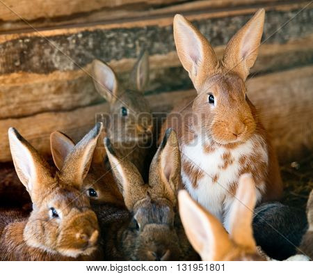 a lot of rabbits in the wooden hutch