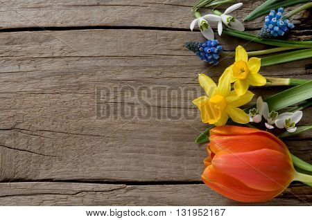 Spring flowers on weathered wood with copyspace