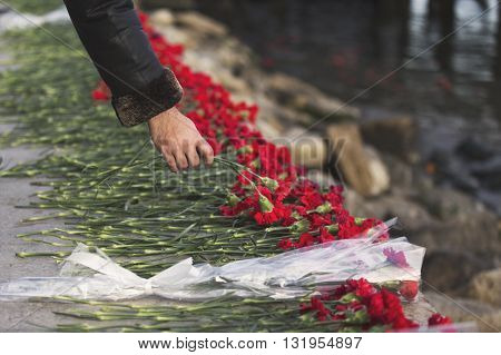 Carnation Flowers Symbol Of Mourning