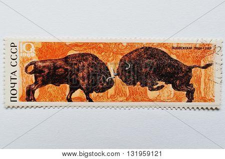 Uzhgorod, Ukraine - Circa May, 2016: Postage Stamp Printed In Ussr Shows Zubr Bull Bison From Bialow