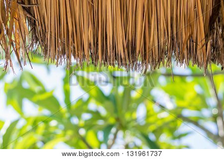 The thatched roof by grass with blur tree background