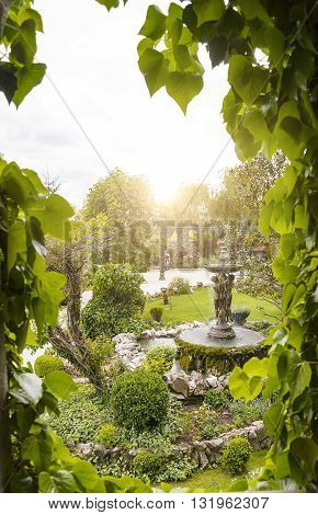 View of the garden from the window entwined with ivy