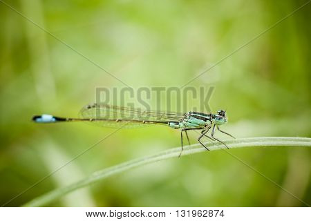 Macro photography of little dragonfly. Nature detail