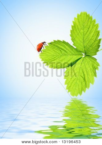 Ladybug sitting on a green leaf reflected in rendered water