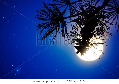 Pine branch and full moon on the night sky. Full Moon. Moon and star. Night sky. Mystic moon.