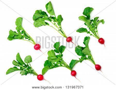 A c red radish isolated on white background