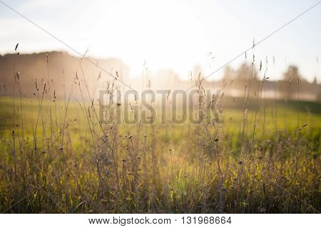 Sun setting in a countryside hay field