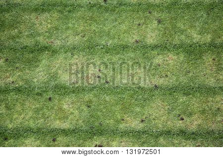 Garden grass mown to form different color rows