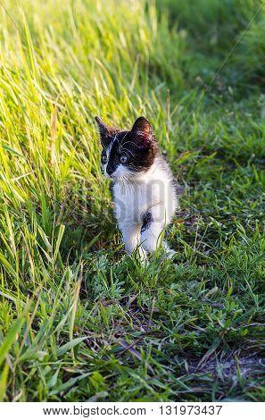 little black funny kitten in the grass outdoors