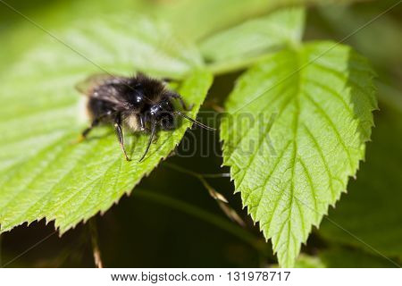 Macro photography of a little bee in a garden