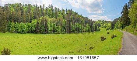 Forest panorama with path / road meadow in the foreground - Wental valley at Swabian Alps