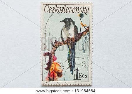 Uzhgorod, Ukraine - Circa May, 2016: A Post Stamp Printed In Czechoslovakia Shows Magpie Bird, Circa