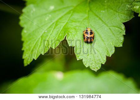 Macro photography of ladybird. Nature detail photo