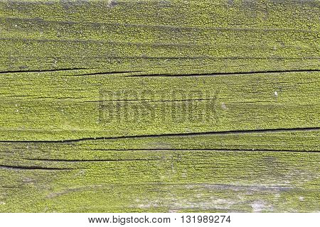 mossy green wood for rustic old background