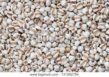 Millet rice millet grains background. Top view