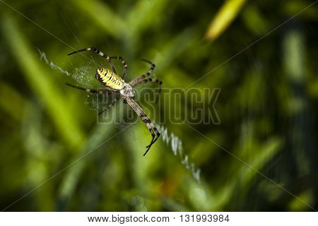 Macro photography of a yellow spider in nature
