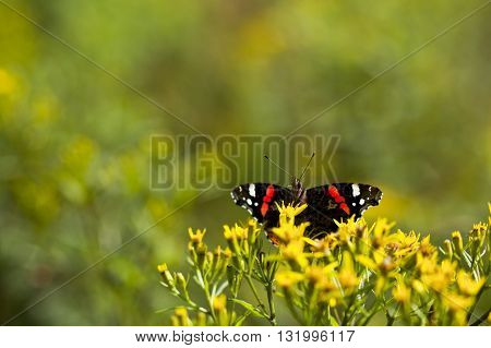 Macro photography of a beautiful butterfly in nature