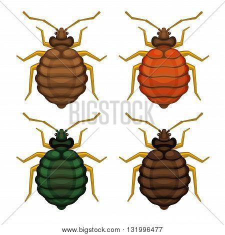 Bedbug Set on White Background. Vector illustration