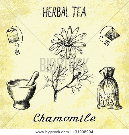 Chamomile herbal tea. Set of vector elements on the basis hand pencil drawings. Herb chamomile tea bag mortar and pestle textile bag. For labeling packaging printed products
