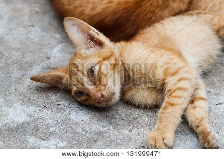 The Pet Young orange cat sleeping selection focus