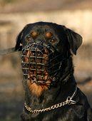 Rott And Muzzle