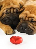 image of valentines day card  - Two sharpei puppies in love - JPG