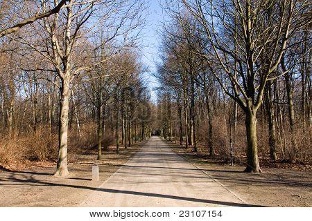 The Tiergarten in winter