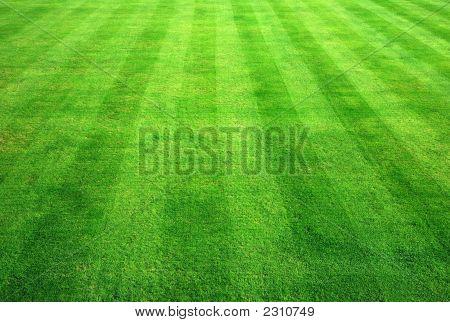 Bowling Green Gras Hintergrund.