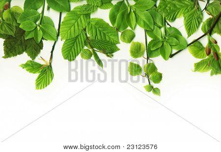 Laub-Rahmen mit Sommer-Blätter
