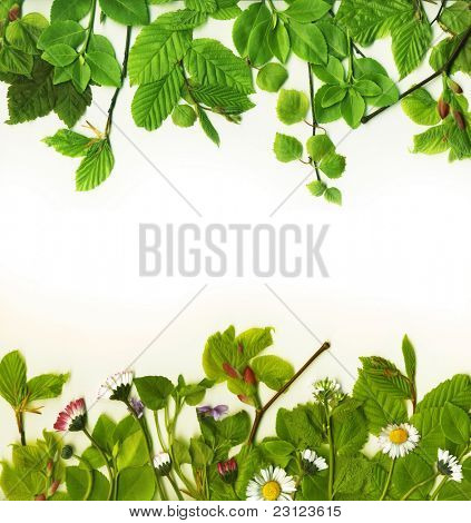 Foliage frame with summer leaves