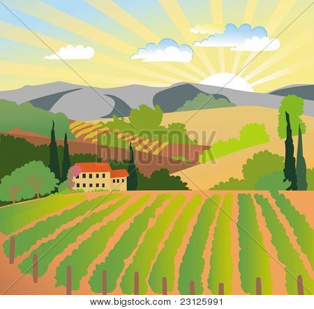 Summer solar rural landscape with a sunset, vineyard and mountains