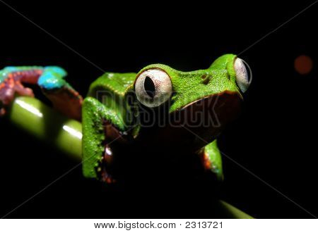 Comical Frog