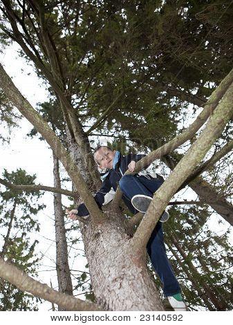 Joven, un árbol que sube