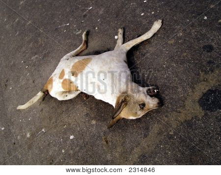 Rotting Carcass